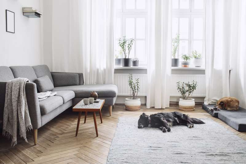 Dog sleeping on a carpet in a modern living room